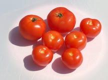 Polish tomatoes. Royalty Free Stock Images