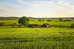 Polish village Landscape Stock Photography