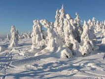 Polish winter. Winter in polisch mountains. Snow on trees Royalty Free Stock Photo