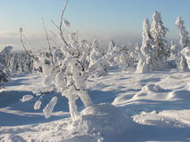 Polish winter. Winter in polisch mountains. Snow on trees Stock Images
