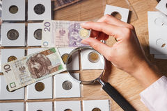 Polish zloty in the woman`s hand Stock Photo