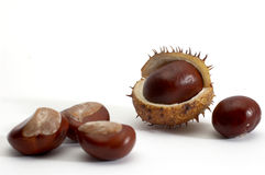 Polished chestnuts Stock Photos