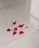 Polished gress floor Stock Photography