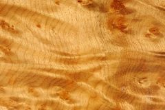 Polished Madrone Root Wood Texture Stock Image