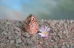 Polished piece of red jasper with Lithops flower Royalty Free Stock Images