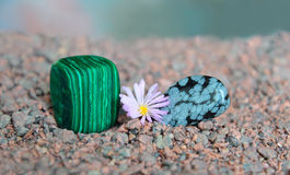 Polished pieces of malachite and obsidian with Lithops flower. Polished but still rough pieces of malachite and obsidian with Lithops flower between them Stock Images