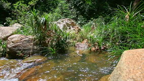 Polished Rock on Fast Transparent Mountain River with Green Bank. Closeup polished rocks by small fast transparent mountain river with forestry bank stock footage