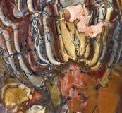 Polished Rock Slice of Cornelian, Jasper, & Druzy Royalty Free Stock Photos