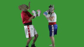 Political parties sparring. Man in elephant GOP mask and woman in donkey Democrat mask wearing boxing shorts sparring against a green screen stock video footage