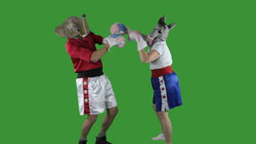 Political parties throwing punches stock footage