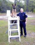 Politie K9 Stock Foto's