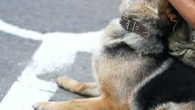 Politieagent in eenvormig petting zijn Duitse herderhond en spelend met haar stock video