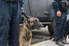 Politieagent en hond op plicht Stock Foto's