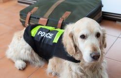 Politiehond met distinctief stock afbeeldingen