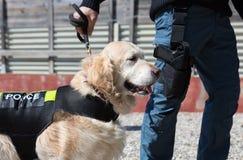 Politiehond met distinctief stock afbeelding
