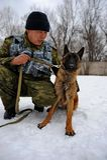 Politiehond opleiding Royalty-vrije Stock Afbeelding