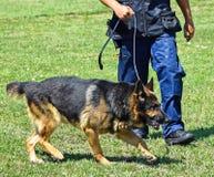 Politiemens met zijn hond Stock Foto's