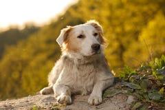 Politowanie imbiru pies Plenerowy na Zielonym tle zdjęcia stock