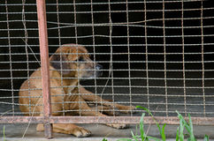 Politowanie pies zdjęcie royalty free