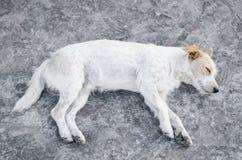 Politowanie pies Obrazy Stock