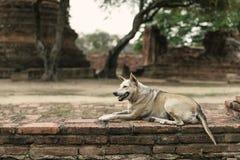 Politowanie pies obrazy royalty free