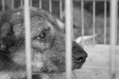 Politowanie stary pies zdjęcia stock