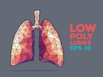 Polivinílico de los pulmones tallado Fotografía de archivo libre de regalías