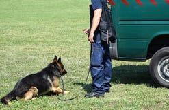 Polizei bemannt mit seinem Hund Stockfoto