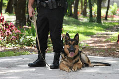 Polizei-Hund 2 stockfotografie