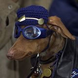 Polizei-Hund lizenzfreie stockbilder