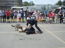 Polizei-Hundedemonstration (2 von 3) stockfotos