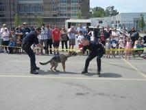 Polizei-Hundedemonstration (1 von 3) stockbilder