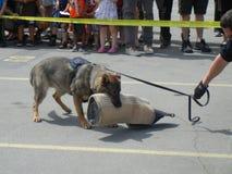 Polizei-Hundedemonstration (3 von 3) lizenzfreies stockfoto