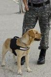 Polizeihund Stockbild