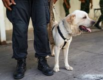 Polizeihund in der Aufgabe, die Bombe im Falle finden stockfoto
