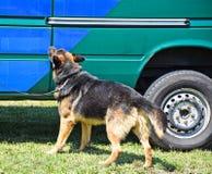 Polizeihund nahe bei dem Fahrzeug des Verdächtigen Lizenzfreie Stockfotografie