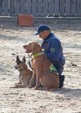 Polizeihunde bei der Arbeit Lizenzfreie Stockfotos