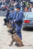 Polizeihunde bei der Arbeit Stockfotos