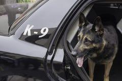 Polizia K-9 in pattuglia della polizia Fotografia Stock Libera da Diritti