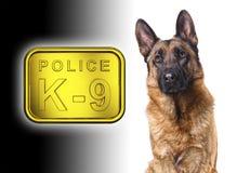 Polizia tedesca di shepard k9 Immagini Stock