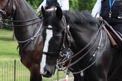 Polizist auf Pferd Lizenzfreies Stockfoto