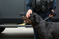Polizist, der einen Polizeihund tappt Stockbild