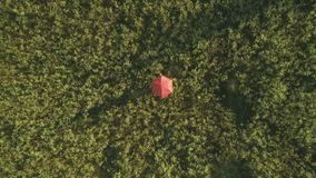 Polka dot red umbrella moving on the field. The camera shoots from above. Little girl walks with the polka dot red umbrella over the meadow field. The camera stock footage