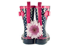 Polka dot rubber boots with flower. White and blue polka dot rubber boots with pink trim and buckle with a pink flower Stock Images