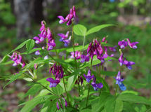 polki kropki sezonu kwitnienia koloru trawy ogródu płatka okwitnięcia menchii lata kwiatu błękitnej łąkowej dzikiej natury zielon Obraz Royalty Free