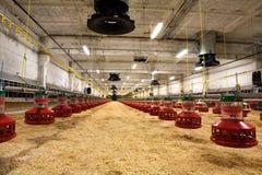 pollame dell'azienda agricola Immagine Stock