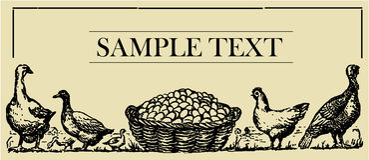 Pollame - scheda del segno Immagine Stock