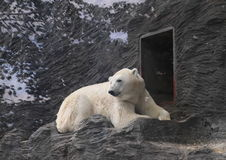 Pollar björn Arkivbilder