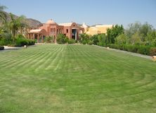 Pollard lawn in Egypt Stock Photo