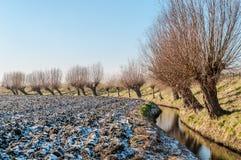Pollard pilar i ett vintrigt landskap i Holland Royaltyfri Fotografi